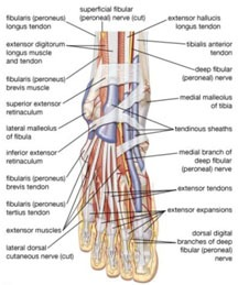 ankle-and-foot-pain1