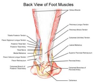 ankle-and-foot-pain3