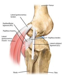 Posterolateral Corner Injury
